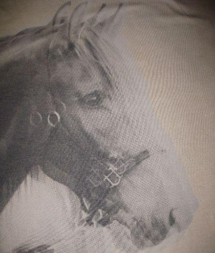 horse-with-anisometropia-1
